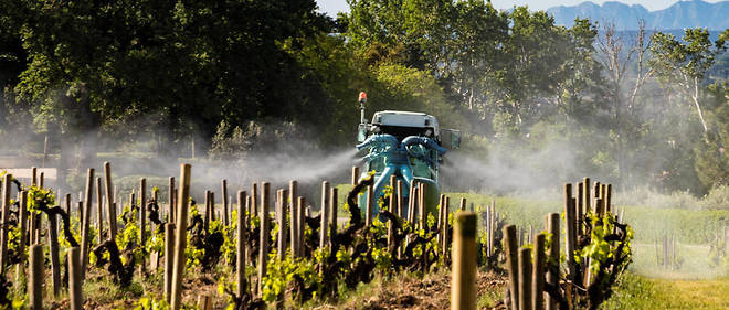 Le traitement des vignes par des pesticides, un procédé de moins en moins accepté dans notre société (Châteauneuf-du-Pape)