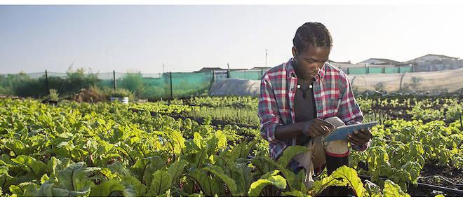 Au fur et à mesure des mutations de son environnement, l'agriculture africaine s'emploie à entrer de plus en plus dans le monde du numérique.