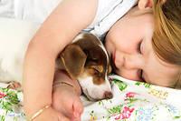 On ne laisse pas un chien qui vient d'être traité contre les puces dormir dans le lit d'un enfant.