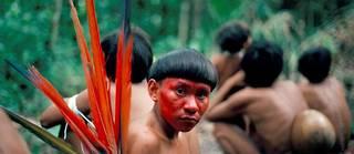Un Yanomamö apprêté pour une célébration au Brésil.Chagnon découvre que jusqu'à 30 % des hommes sont tués par leurs congénères et montre que les tueurs ont trois fois plus d'enfants et deux fois plus d'épouses que les autres.