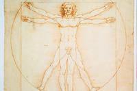 Les proportions humaines, d'apres Vitruve. Dessin de Leonard de Vinci. 344 x 245 mm. Galerie dell'Accademia, Venise.
