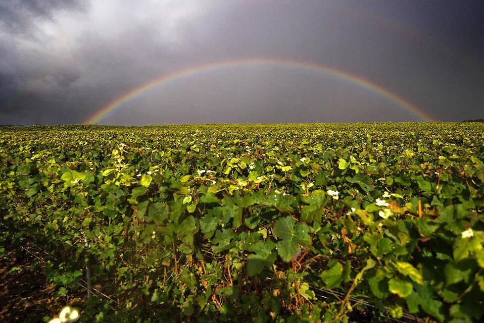 <p><strong>Champagne.</strong> Réparti en 4 grandes régions de production, Montagne de Reims, Vallée de la Marne, Côte des Blancs et Côte des Bar le vignoble champenois s'étend sur 5 départements à l'est de l'Île de France.</p>