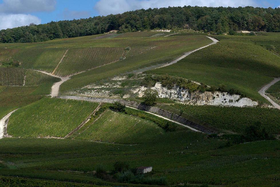 <p><strong>Syndicat.</strong> La bannière Champagne de Vignerons, créé en 2001 par le Syndicat Général des Vignerons de la Champagne, regroupe environ 4 000 vignerons et coopératives qui revendiquent une identité et des valeurs fortes et produisent des vins de caractère à l'image de leurs terroirs.</p>