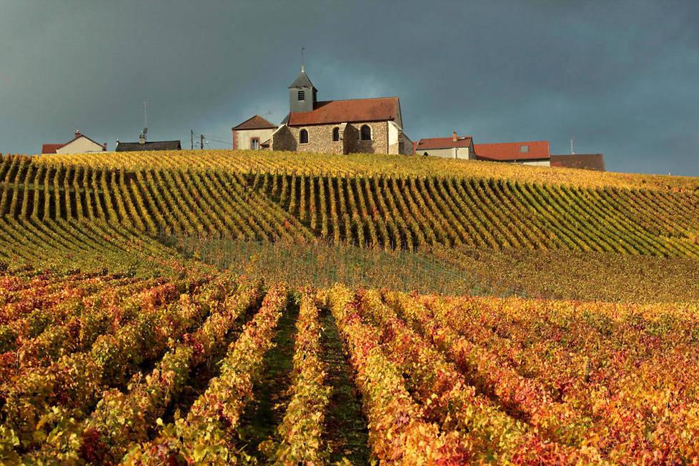 <p><strong>Chiffres.</strong> L'AOC Champagne compte 319 communes viticoles réparties sur 33 843 hectares exploités par quelque 15800 viticulteurs dont environ 4000 vignerons, 134 coopératives et 340 maisons de négoce pour une production de 301,9 millions de bouteilles (chiffre 2018).</p> <p></p>