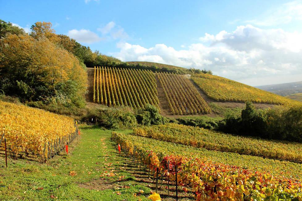 <p>Son exposition favorable vers l'est, le sud et le sud-est favorise la production de chardonnay, d'où sont issus la plupart des champagnes Blanc de Blancs. Ces derniers se distinguent par une couleur jaune pâle et or vert et des arômes d'agrumes.</p>