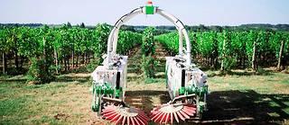 Ted, le robot de la start-up Naïo Technologies, utilise l'IA pour se guider dans les vignes.  ©Tien Tran