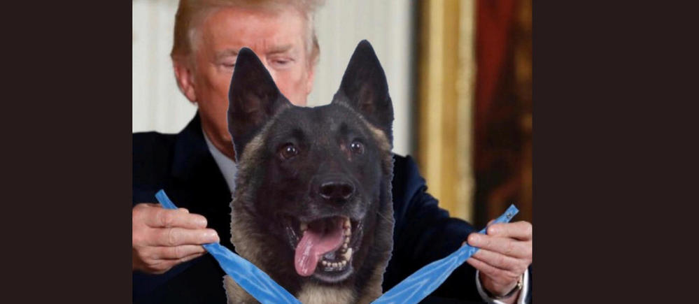 Et Donald Trump Remit Une Medaille A Un Chien Le Point