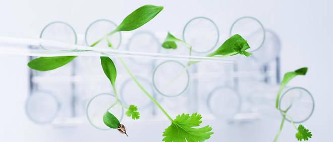 En 2018, dans le monde, 191,7 millions d'hectares étaient plantés d'OGM.