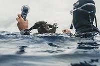 Le nageur longue distance Benoît Lecomte a parcouru 550 kilomètres au milieu du Pacifique pour alerter sur la présence massive de matières plastiques dans l'océan.