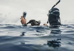 <p>Le nageur longue distance Benoît Lecomte a parcouru 550 kilomètres au milieu du Pacifique pour alerter sur la présence massive de matières plastiques dans l'océan.</p> <p></p>