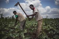 La question agricole requiert une attention particulière sur un continent qui connaît une forte croissance démographique et qui doit créer une moyenne annuelle de 20 millions d'emplois dans les décennies à venir.