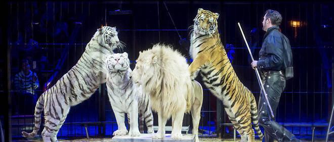 À Paris, la mesure qui était en discussion depuis deux ans ne s'appliquera toutefois pas aux cirques Bouglione ou Gruss (photo d'illustration).