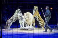 A Paris, la mesure qui etait en discussion depuis deux ans ne s'appliquera toutefois pas aux cirques Bouglione ou Gruss (photo d'illustration).
