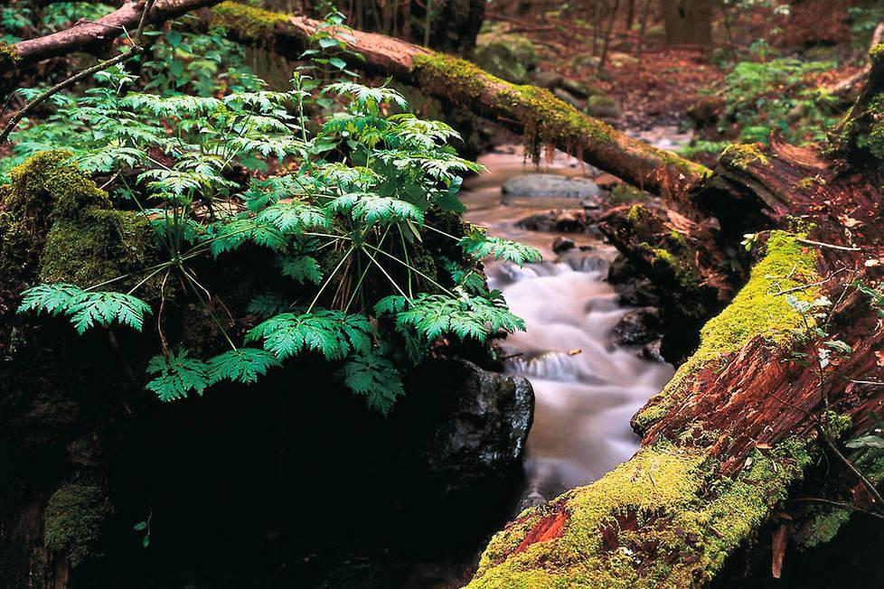 <p>La magie de La Gomera réside en grande partie dans ses forêts ancestrales comme ici au coeur du Parc National de Garajonay.</p>