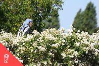 Le CCAS a demandé à la religieuse d'enlever son voile et son habit, « par respect des autres résidents et pour ne pas les gêner ». (Illustration.)