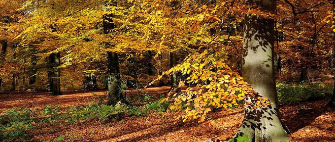 Le corps de la jeune femme enceinte a été retrouvésamedi près d'un sentier en forêt de Retz (Somme).