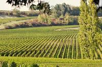 <p>Evénement. Les 6 et 7 décembre prochains, l'appellation castillon-côtes-de-bordeaux et ses vignerons débarquent dans vos maisons.</p>