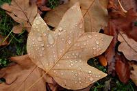Des phénomènes pluvieux sont prévus dans plusieurs régions du pays. (Illustration)