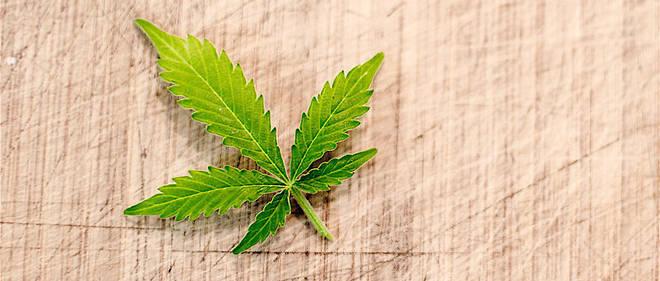 La production et la vente de cannabis light, c'est-a-dire ne contenant pas plus de 0,5 % de THC, a ete autorisee par le Parlement italien dans la nuit de jeudi a vendredi (photo d'illustration).