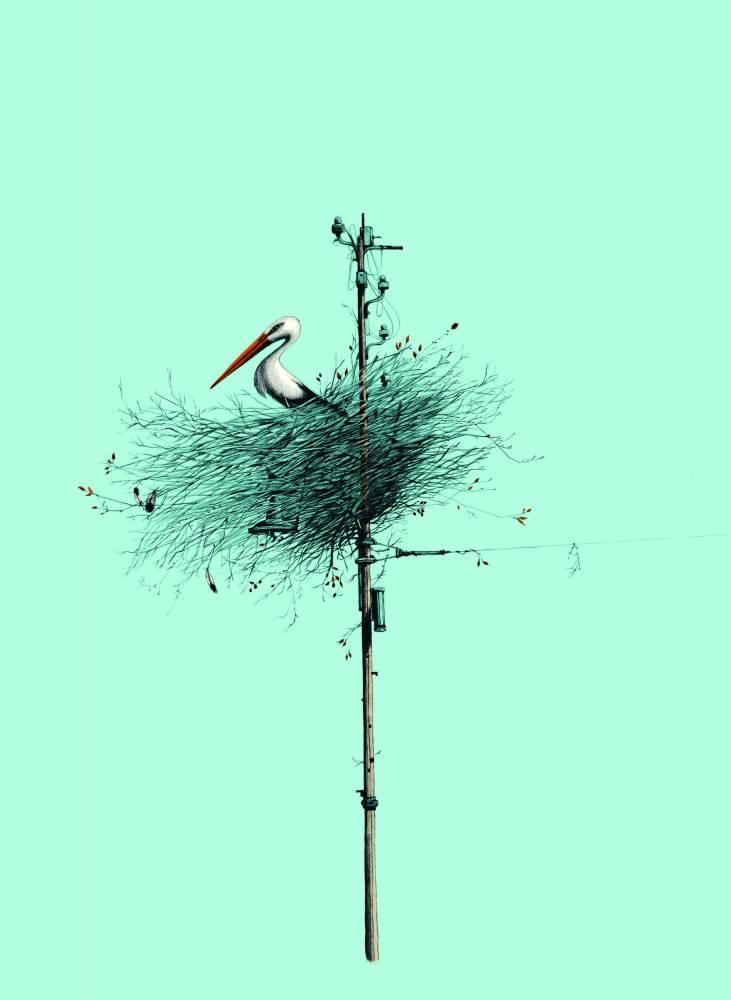 Cigogne ©  Hachette