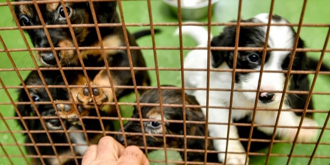 Covid 19 Adopter Un Animal Une Nouvelle Derogation Au Confinement Le Point