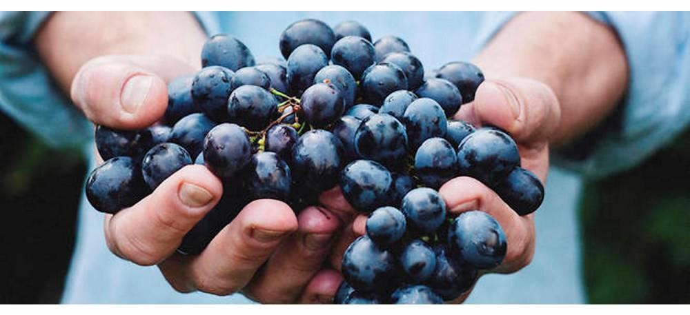 vin nature ©  Maja Petric