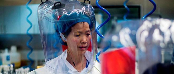 La virologue Shi Zhengli, l'une des directrices de l'Institut de virologie de Wuhan, est la meilleure specialiste au monde des coronavirus de chauve-souris, dont descend le Sars-CoV-2.