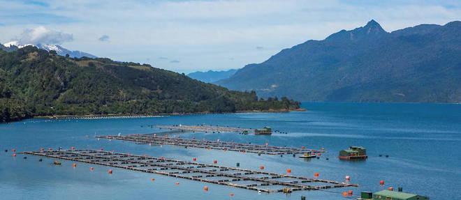 L'activite d'elevage de saumons, ici a Bahia Ralun, represente des milliers d'emplois au Chili, deuxieme pays producteur au monde.