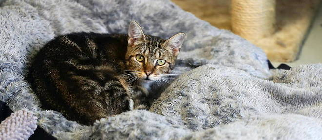 Lors du proces a la Hove Crown Court, pres de Brighton, les proprietaires des animaux domestiques tues avaient raconte leur horreur en retrouvant leurs chats ensanglantes sur le pas de leur porte.