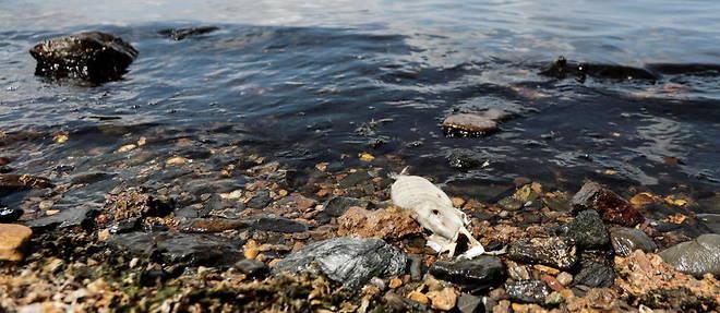 La faune d'un des plus grands lagons d'eau salee d'Europe pourrait courir un danger jusqu'a present sous-estime.