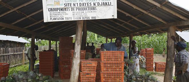 A travers quelques produits agricoles cles comme le cacao, le soja ou le coton, le Togo veut impulser de nouveaux schemas pour faire de la transformation locale une realite.